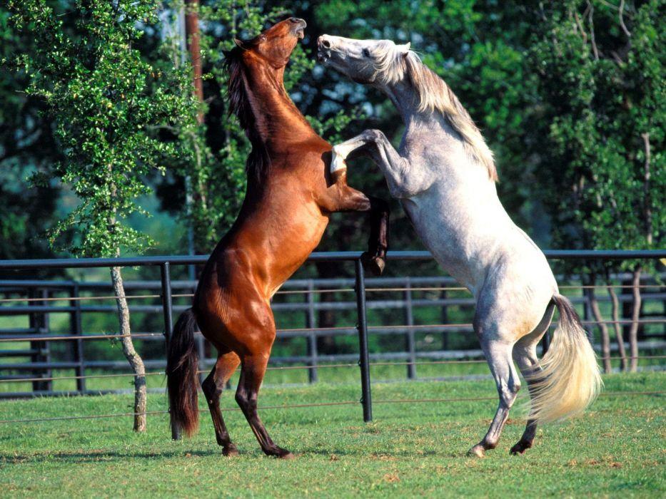 nature horses wallpaper