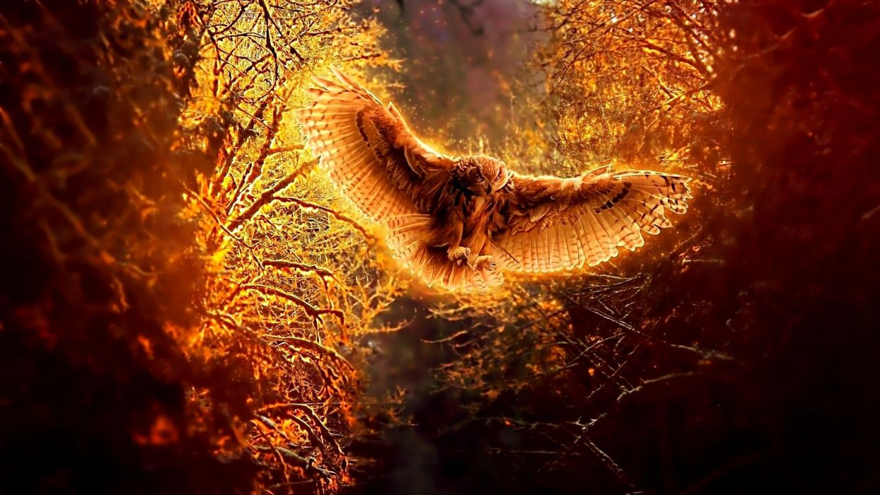 wings trees forest owls wallpaper