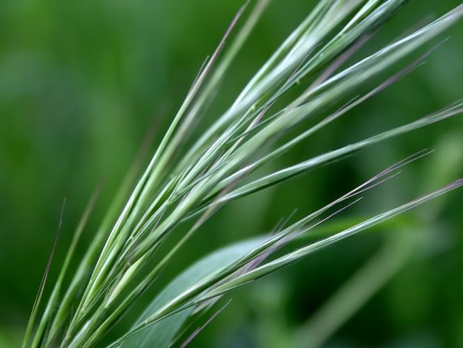 green nature wall leaves grass water droplets macro Flora floral wallpaper