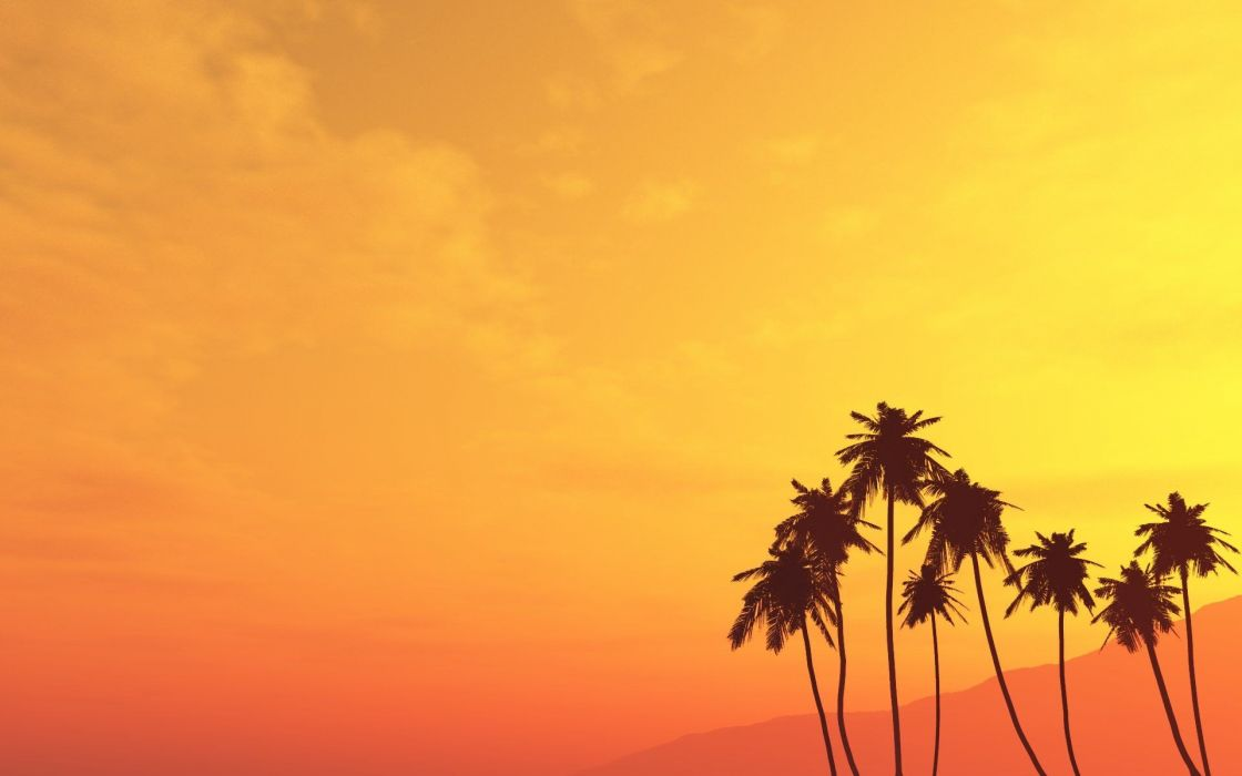 nature plants palm trees wallpaper