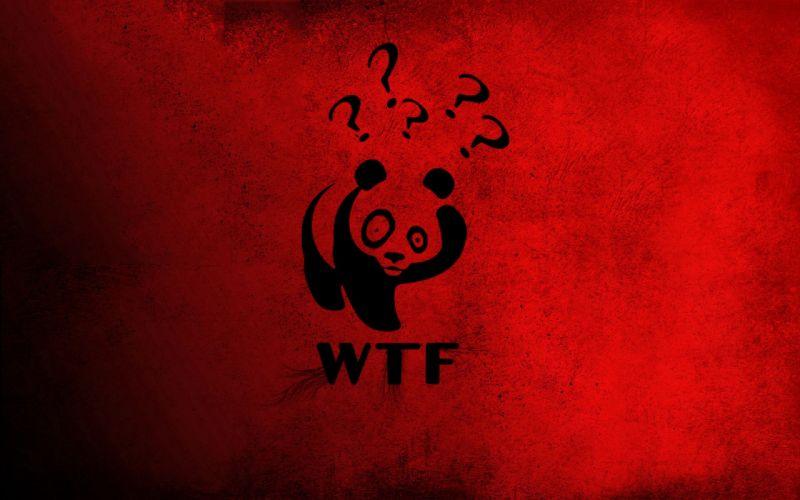 WTF panda bears wallpaper