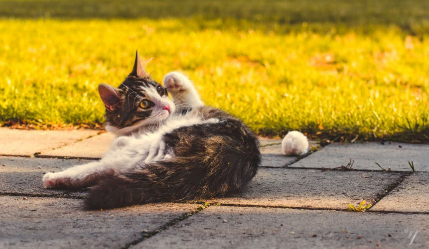 cats face eyes cute grass humor wallpaper