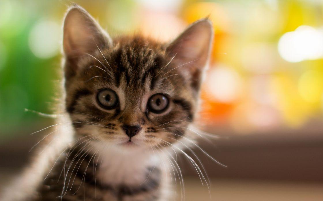 Cats Kittens Babies Face Eyes Cute Wallpaper 1920x1200