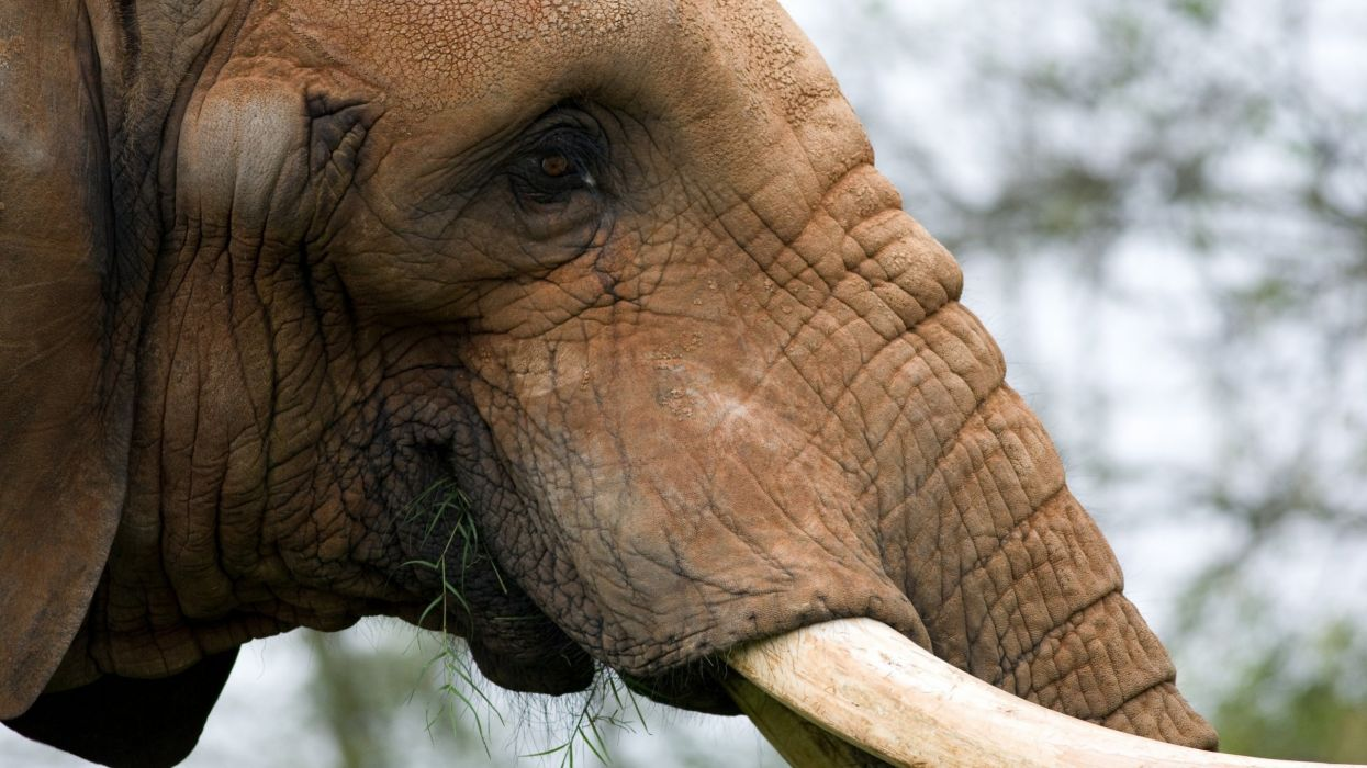 animals elephants portraits wallpaper