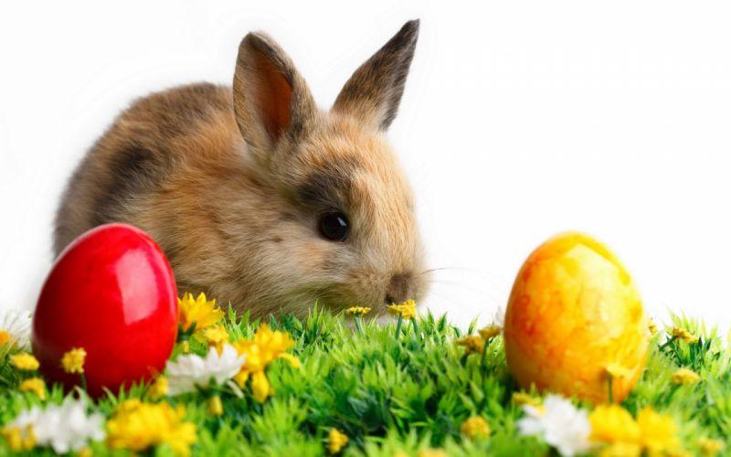 Cute Rabbits easter holidays seasonal wallpaper