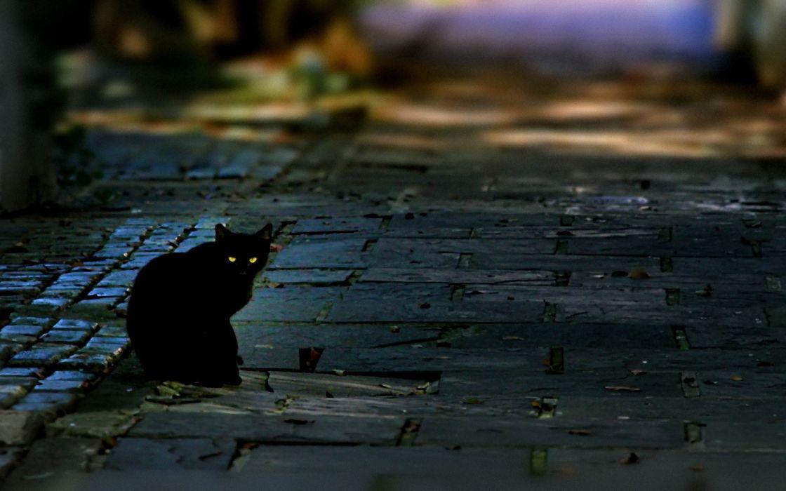 cats roads depth of field wallpaper
