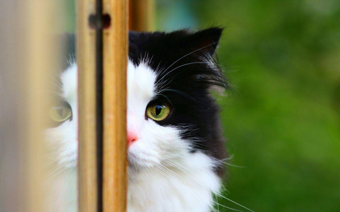 cats animals domestic cat wallpaper