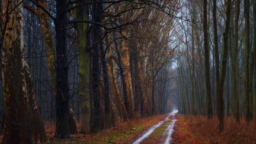 nature trees forest roads The Road autumn wallpaper