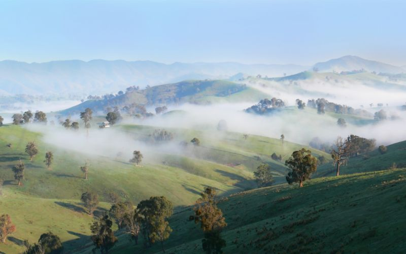 trees hills fog countryside sunny wallpaper