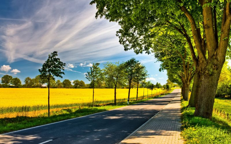 nature trees streets sunlight roads yellow field wallpaper