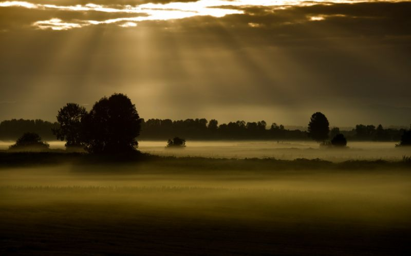 field fog night landscapes trees mist sky clouds sunlight rays sunset sunrise wallpaper