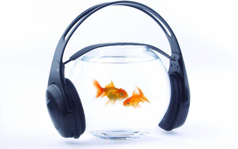 fish gold aquarium water headphones music goldfish humor wallpaper