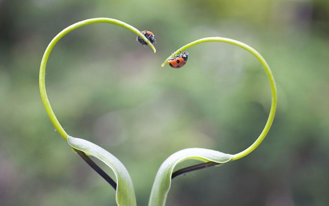 ladybird lady bugs plants heart wallpaper