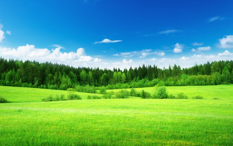 Nature field grass woods trees green forest sky clouds landscapes wallpaper