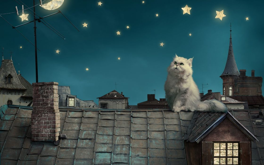 Persian white cat kitten Fairytale fantasy roof house sky night stars moon cities fantasy wallpaper