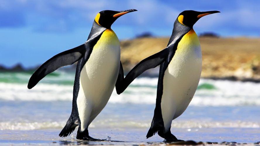 Penguins Couple wallpaper