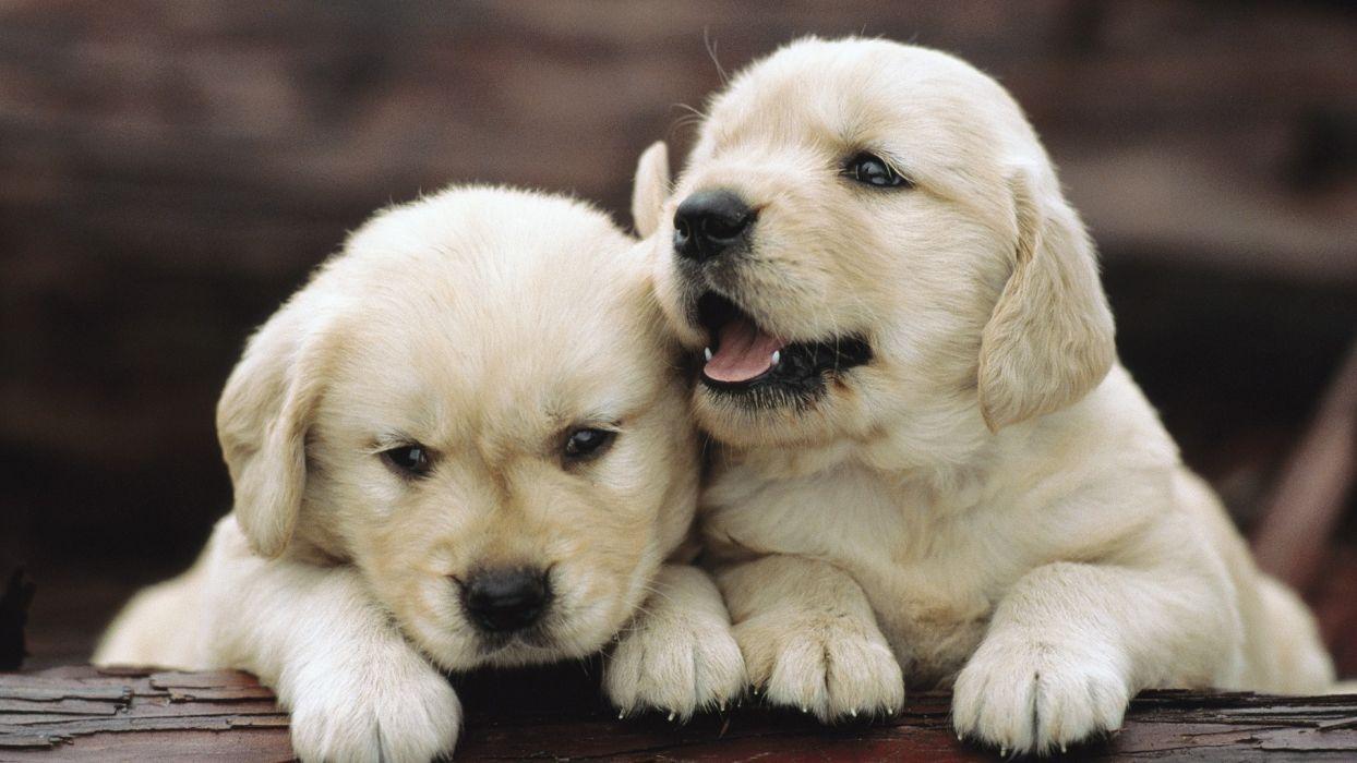Puppy Babies Cute Dogs Wallpaper 1920x1080 55972 Wallpaperup