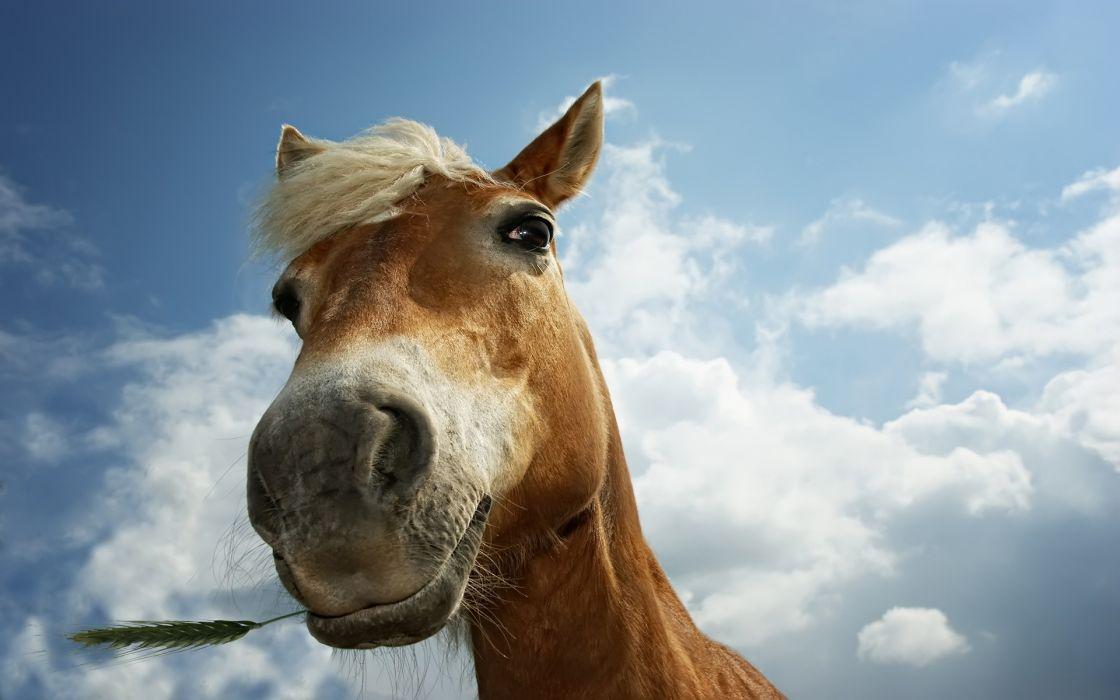 clouds animals horses wallpaper