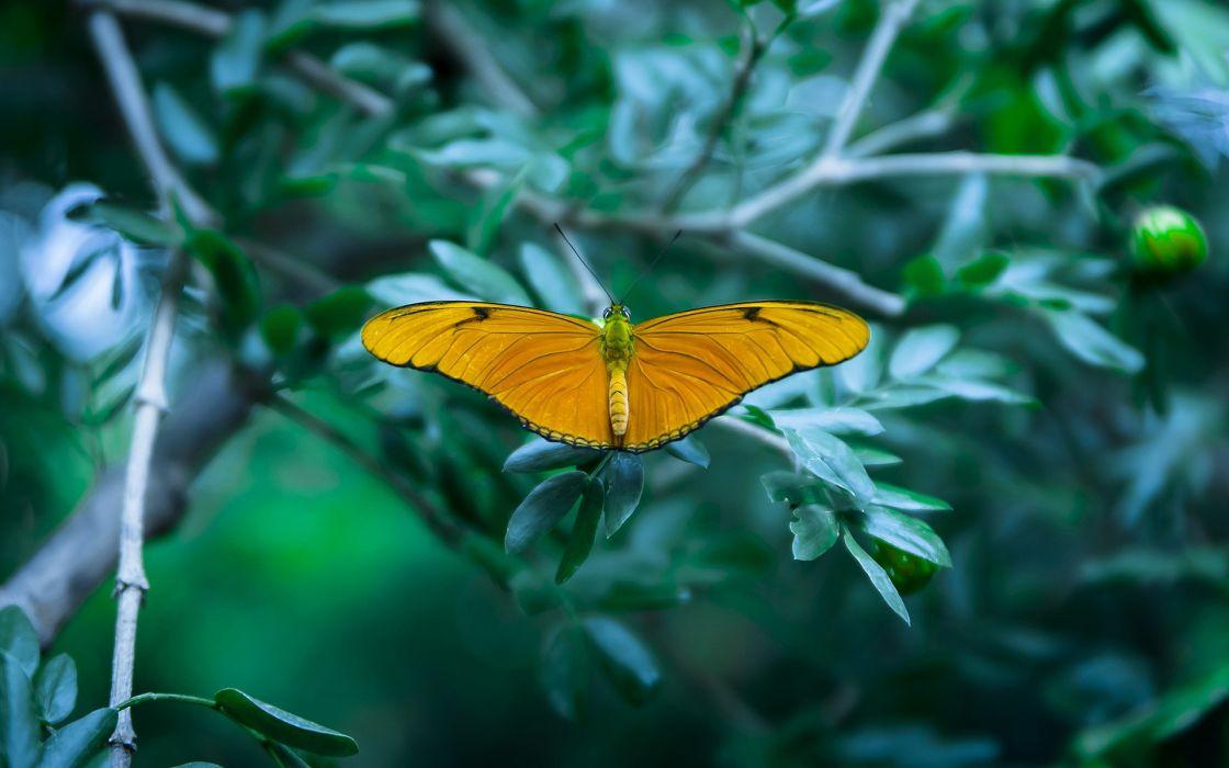 insects macro butterflies wallpaper