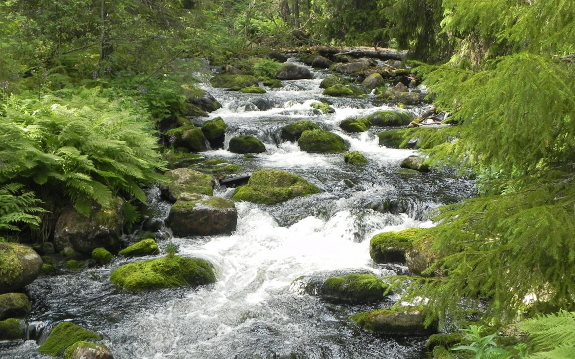 stream rivers trees forest ferns plants moss wallpaper