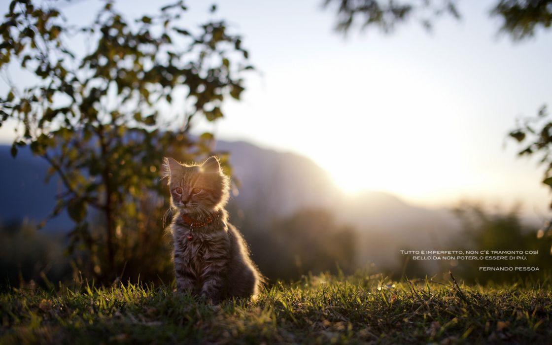 sunlight kittens cats babies cute wallpaper