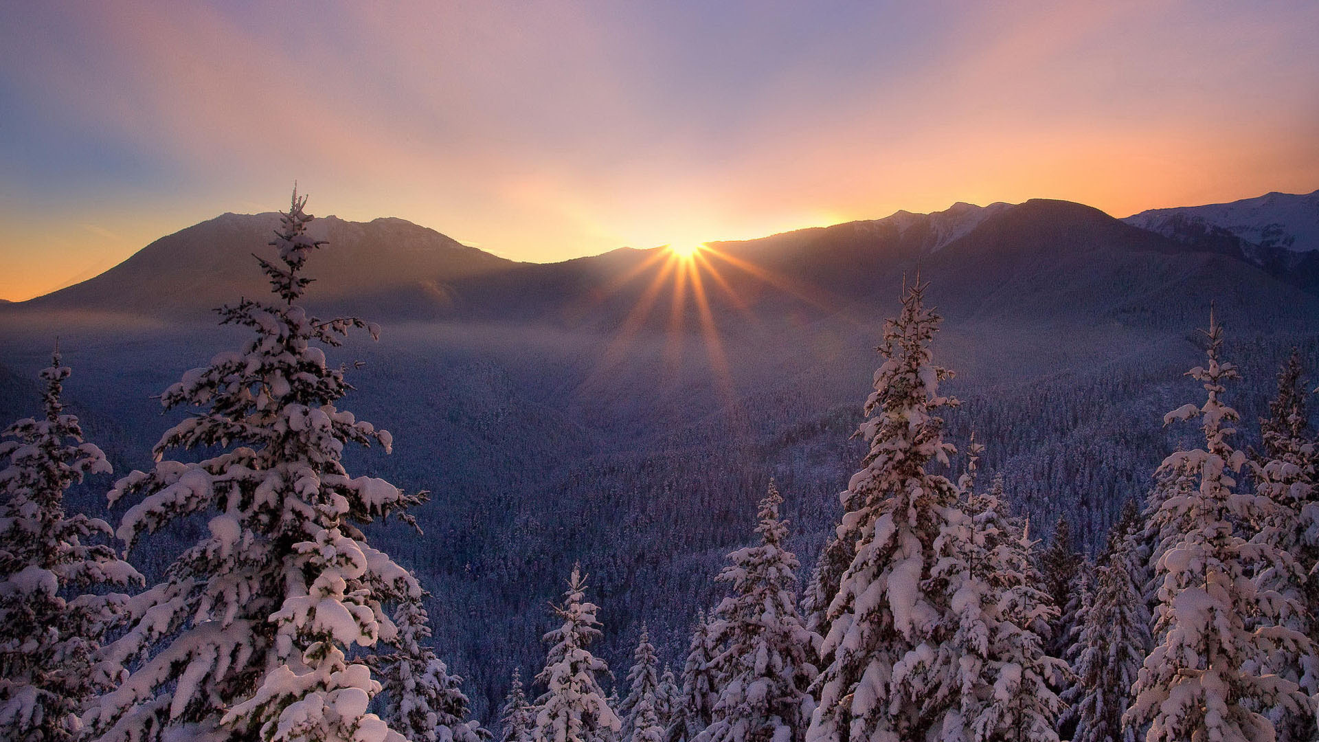 Sunset winter nature lesogore cold beautiful trees ...