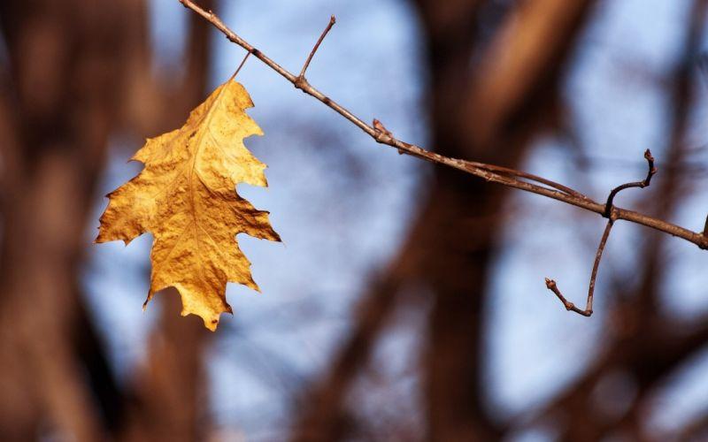 nature autumn (season) leaves macro depth of field wallpaper