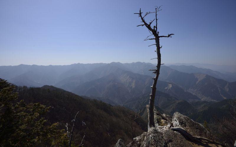 Tree Landscape Mountains haze sky wallpaper