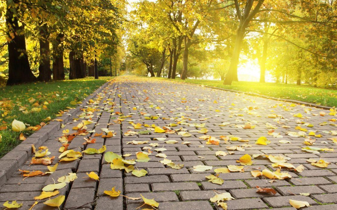 trees leaves sunlight parks fallen leaves wallpaper