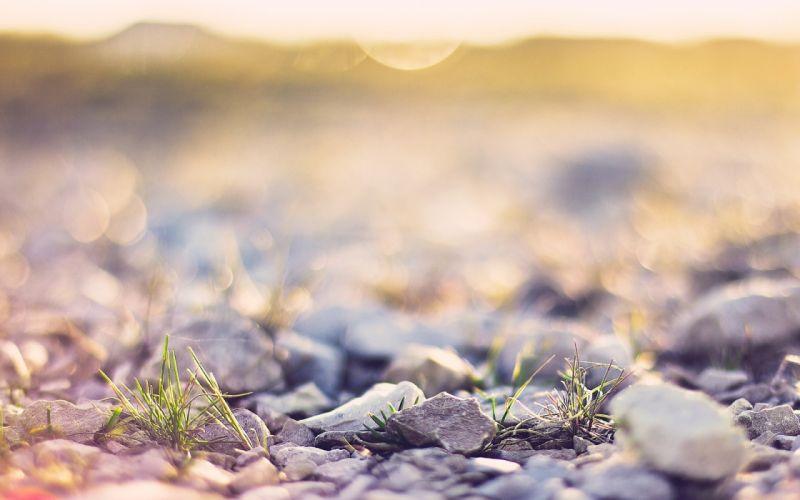 nature rocks macro depth of field wallpaper