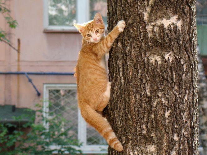 cats animals funny wallpaper