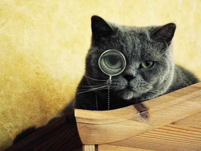 cats animals gray glasses green eyes wallpaper