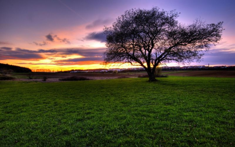 green sunset landscapes nature trees grass wallpaper