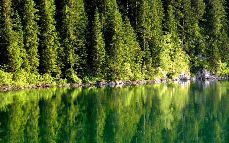 nature trees lakes lakeside wallpaper