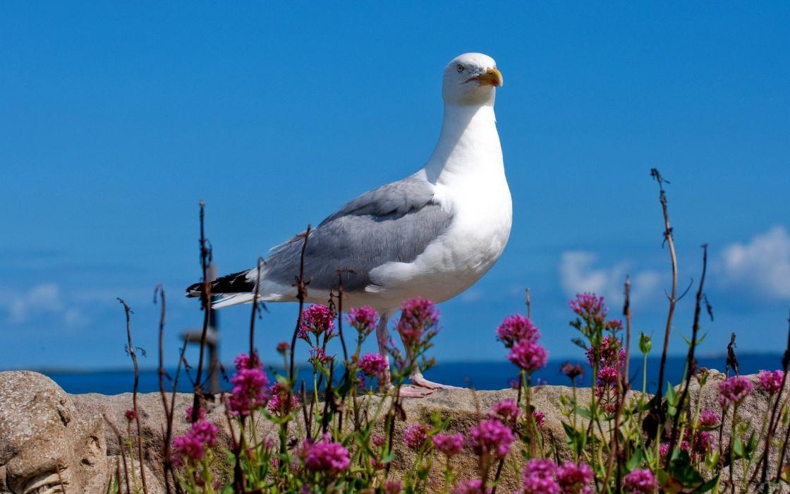 birds seagulls wallpaper
