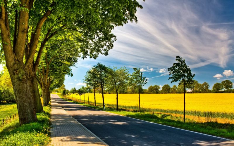 clouds trees leaves wildlife fields path spring (season) roads sunny wallpaper