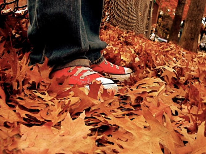 autumn (season) shoes Converse sneakers wallpaper
