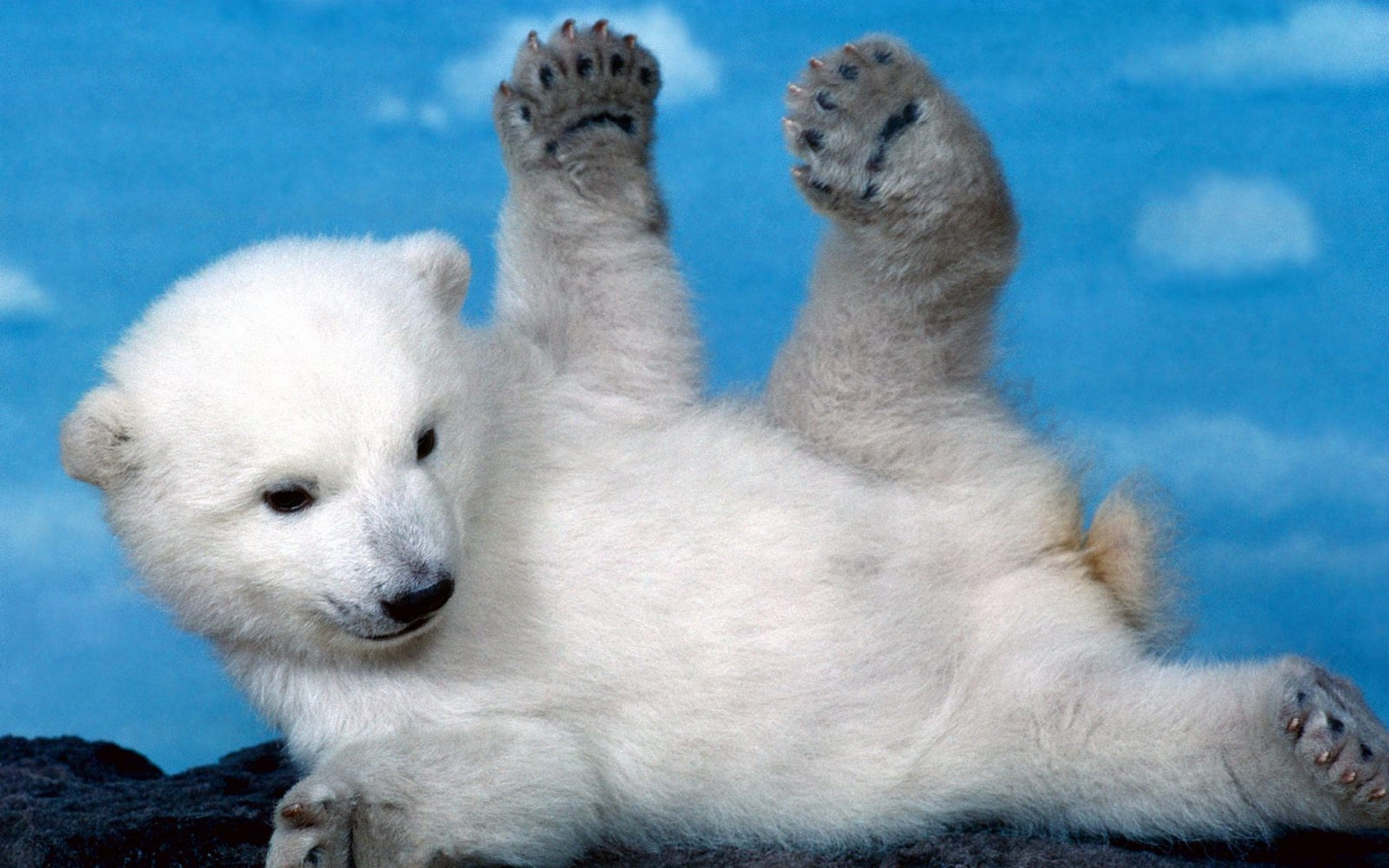 White Cubs Skyscapes Polar Bears Furry Baby Animals Wallpaper