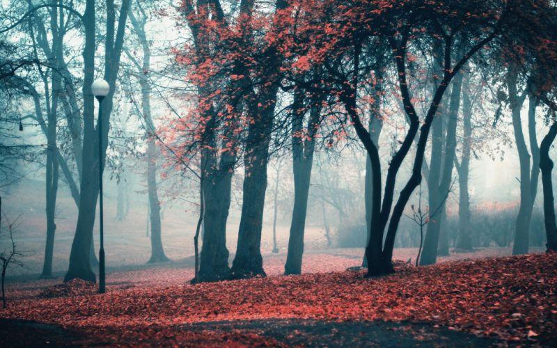 landscapes trees autumn (season) leaves fog lanterns parks fallen leaves wallpaper