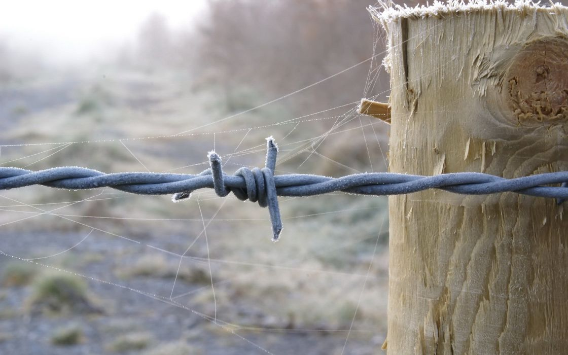 barbed wire spider webs wallpaper