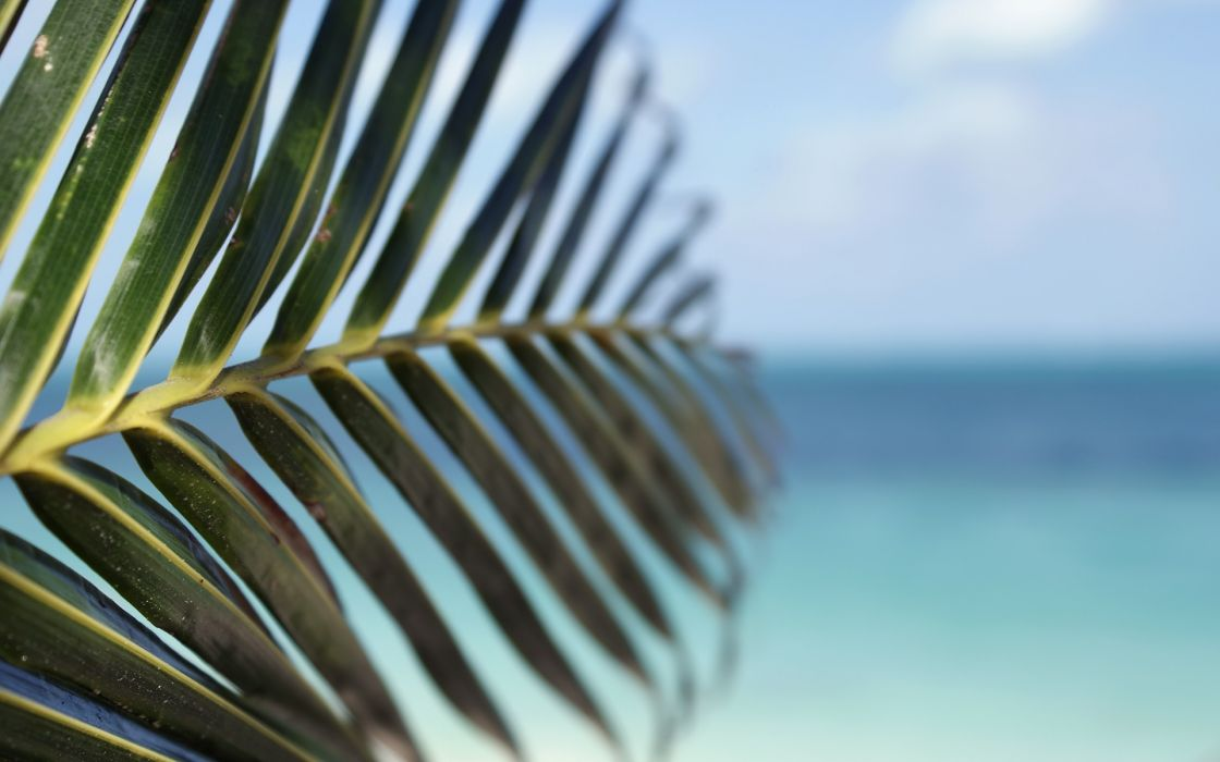 water leaf beach tropical palm trees depth of field sea wallpaper