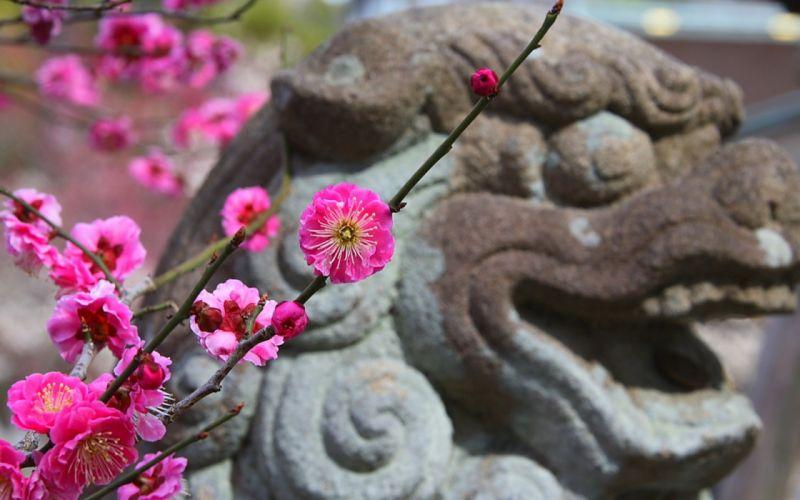 Japan cherry blossoms flowers spring (season) statues pink flowers wallpaper