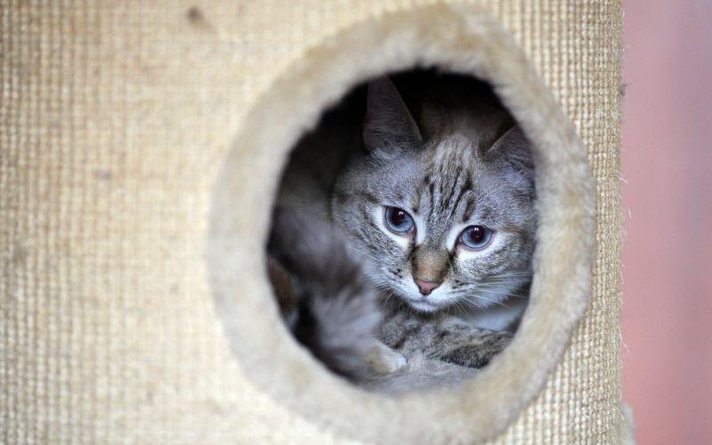cats hole wallpaper