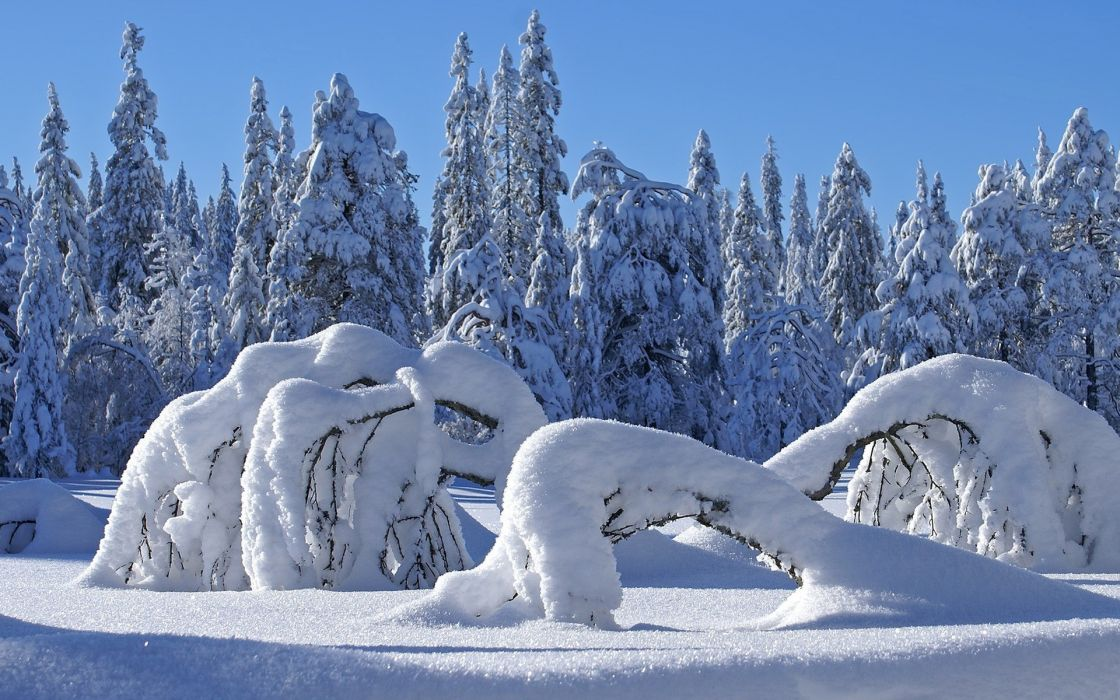 landscapes winter snow trees sunlight wallpaper