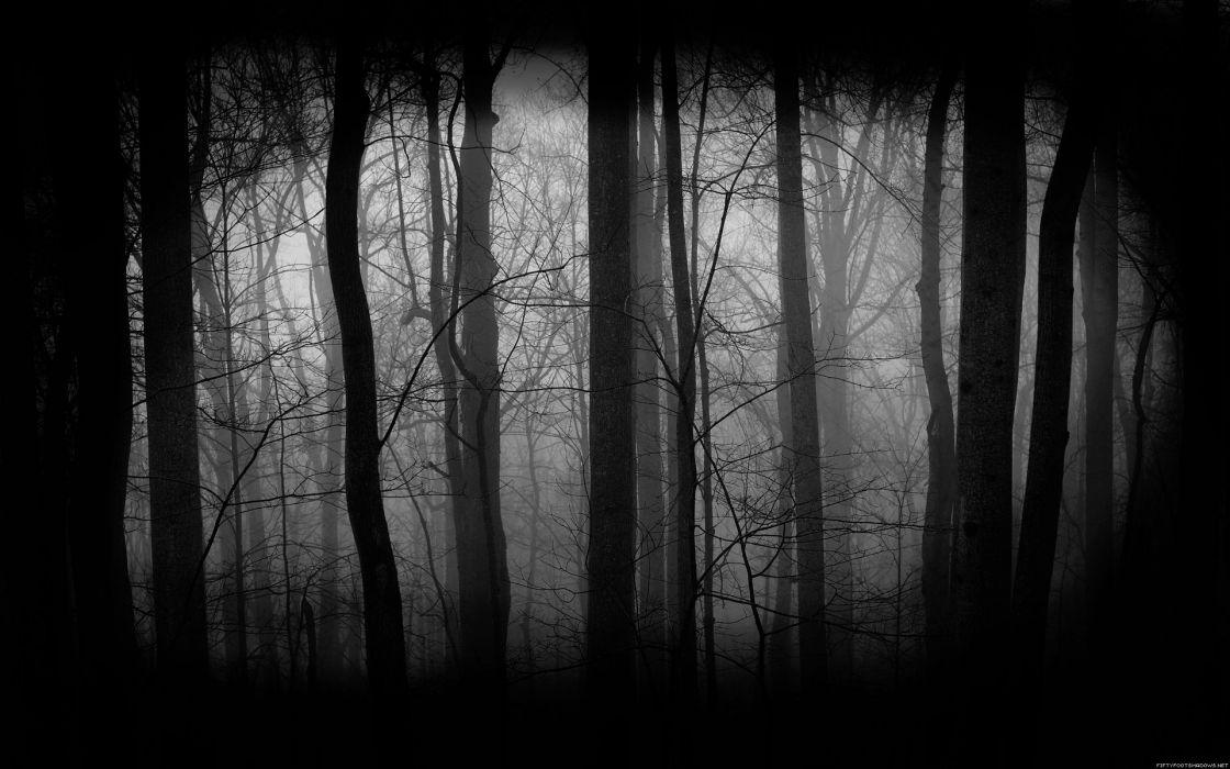 forest woods wallpaper
