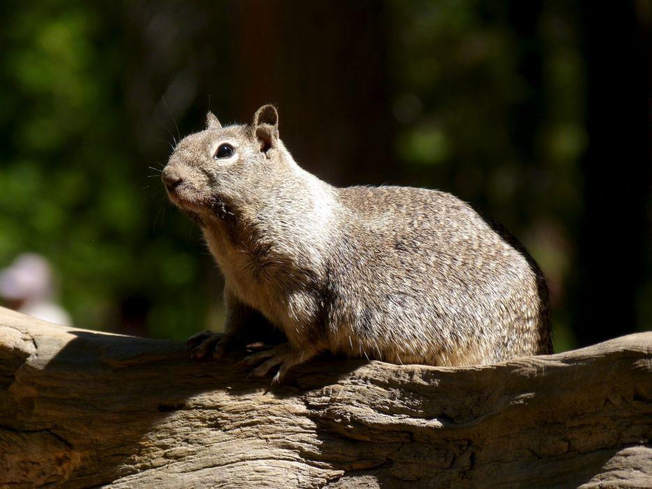 nature animals squirrels wallpaper