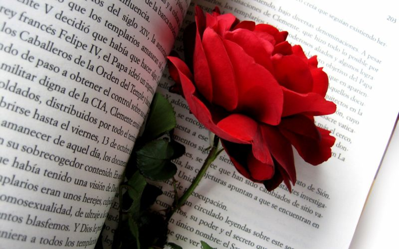 flowers text roses red rose wallpaper