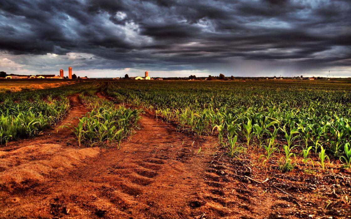 landscapes fields overcast cornfield tire tracks wallpaper