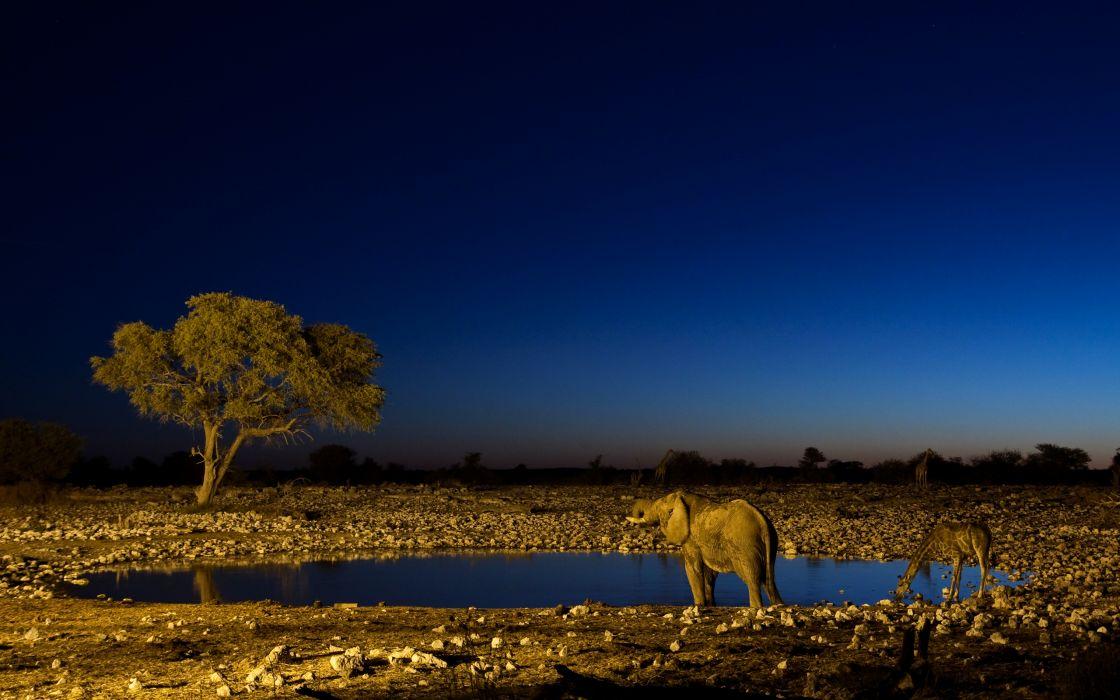 trees animals elephants Africa giraffes wallpaper