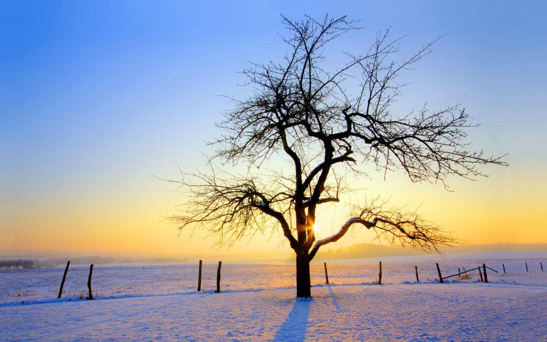 sunrise winter trees wallpaper